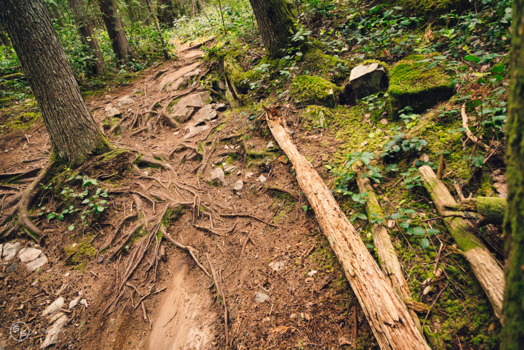 Perfect trail conditions on Crouching Monkey, Squamish