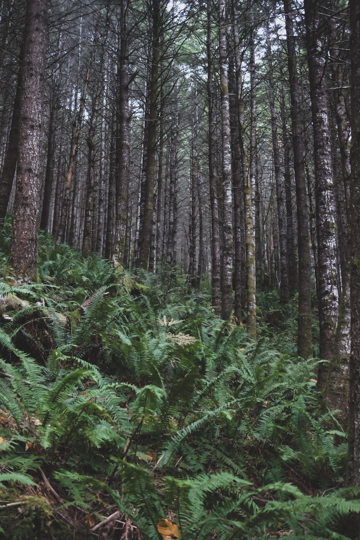 These Woods, Them Ferns of Squamish